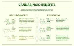 Cannabinoid fördert horizontales infographic lizenzfreie abbildung