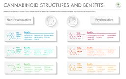 Cannabinoid Stuctures and Benefits horizontal business infographic