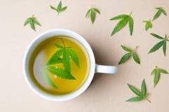 Cannabisörtte- och marijuanasidor arkivfoton