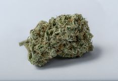 cannabis Royalty-vrije Stock Afbeelding