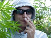 Cannabis Stock Photos