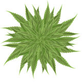 Cannabis images stock