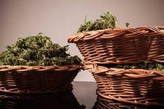 cannabis Arkivbilder