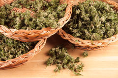 cannabis Royaltyfri Bild