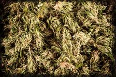 cannabis Royaltyfri Foto
