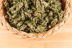 cannabis Arkivfoto