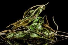 cannabis Royaltyfria Foton