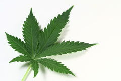 Cannabis Stock Images