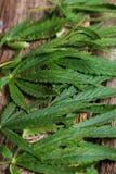 cannabis Royaltyfri Fotografi