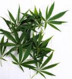 cannabis Arkivfoton