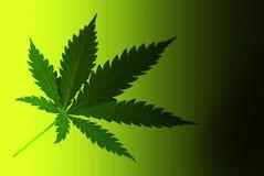 Cannabis Stock Photo