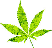 Cannabis Royalty Free Stock Photo