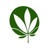 cannabis illustration stock