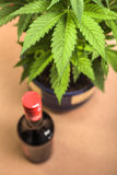 Cannabis and alcohol. Cannabis plant and bottle of alcohol Stock Photos