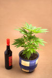 Cannabis and alcohol Royalty Free Stock Photography