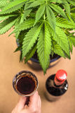 Cannabis and alcohol Royalty Free Stock Photo