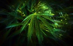 Cannabis background. marijuana club. Stock Image