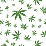 Cannabis Background. Marijuana Ganja Weed Hemp Leafs Seamless Vector Pattern. Royalty Free Stock Images