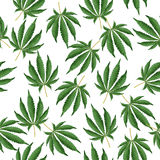 Cannabis Background. Marijuana Hemp Texture. Green Leaf. Hashish Narcotic. Royalty Free Stock Photo