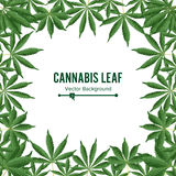 Cannabis Background. Vector Marijuana Frame. Green Leaf Royalty Free Stock Photography