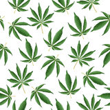 Cannabis Background. Vector Marijuana Seamless Pattern Stock Images