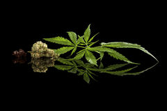 Cannabis on black. Royalty Free Stock Images