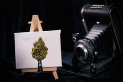 Cannabis bud with easel and vintage camera royalty free stock images