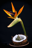 Cannabis bud with fresh coconut and tropical flower isolated - i royalty free stock image