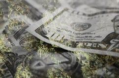 Cannabis Bud With Money High Quality lagerför fotoet royaltyfria bilder