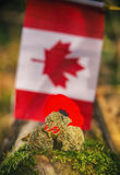 Cannabis buds in front of a Canadian flag - medical marijuana co Royalty Free Stock Images