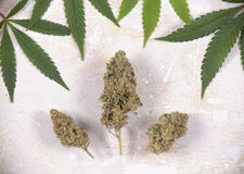 Cannabis buds with pot leaves over white - Medical marijuana bac Stock Photography