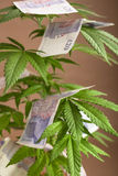 Cannabis business Stock Photos