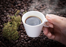 Cannabis coffee cup in hand. Hand grabbing an ear cup of hot espresso as beside cannabis buds lay on many roasted coffee beans Royalty Free Stock Image