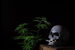 Cannabis de tabagisme de crâne photographie stock