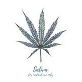 Cannabis dell'illustrazione dell'acquerello Cannabis sativa, cannabis Ind Fotografia Stock Libera da Diritti