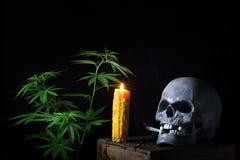 Cannabis di fumo del cranio Immagini Stock Libere da Diritti