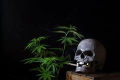 Cannabis di fumo del cranio Fotografie Stock