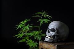 Cannabis di fumo del cranio Immagini Stock