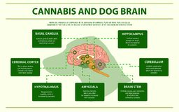 Cannabis and dog brain horizontal infographic royalty free illustration