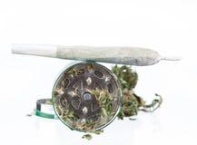 Cannabis dried plant, marijuana Royalty Free Stock Photo