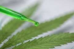 Cannabis Drugs, Analysis of Cannabis in laboratory. royalty free stock images