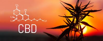 Cannabis e marijuana di CBD Prodotti della canapa dell'olio Formula chimica di Cannabidiol Prodotti premio crescenti della cannab royalty illustrazione gratis