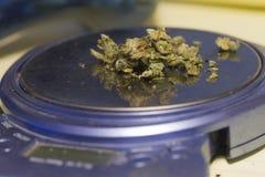 Cannabis em uma escala Fotografia de Stock