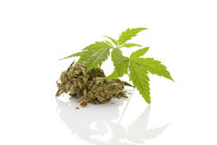 Cannabis. Cannabis foliage on white background. Alternative medicine Stock Photos