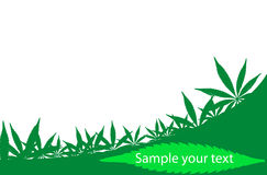 Cannabis frame Stock Image