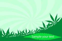 Cannabis frame Stock Photos