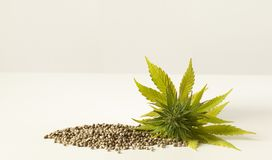 Cannabis green flower raw hemp seeds Royalty Free Stock Images