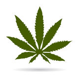 Cannabis green leaf Royalty Free Stock Photo