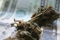 Cannabis högkvalitativa Bud On Twenty Dollar Bill Royaltyfria Bilder