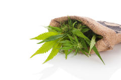 Free Cannabis In Burlap Bag. Stock Images - 97153614
